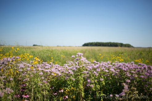 Beautiful prairie at Sod House on the Prairie